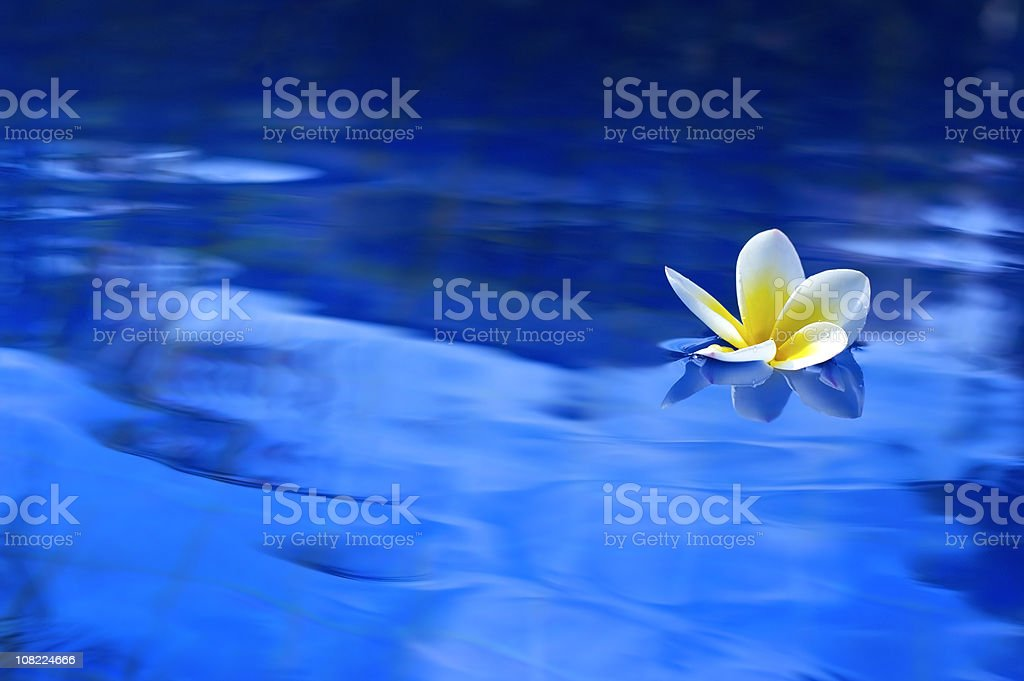 Flower in Pool stock photo