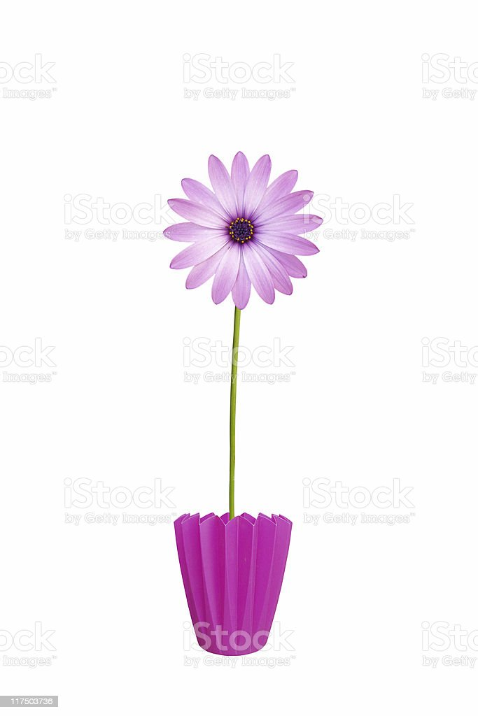 FLower in pot stock photo