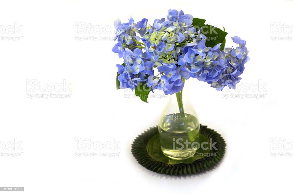 flower in pot stock photo