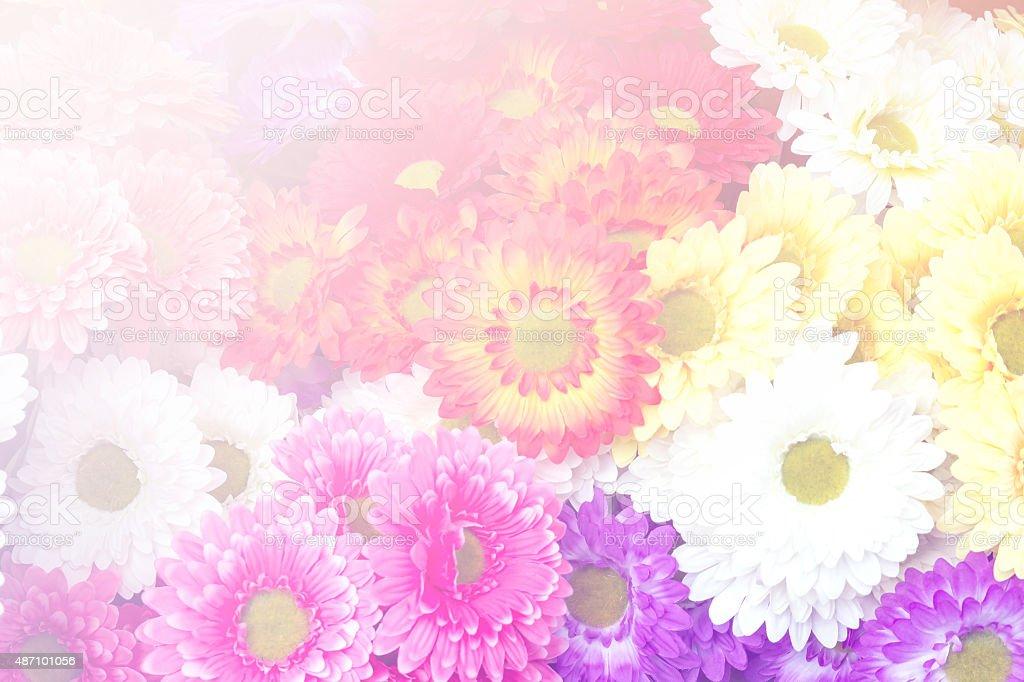 Flower in Rainbow Tone stock photo