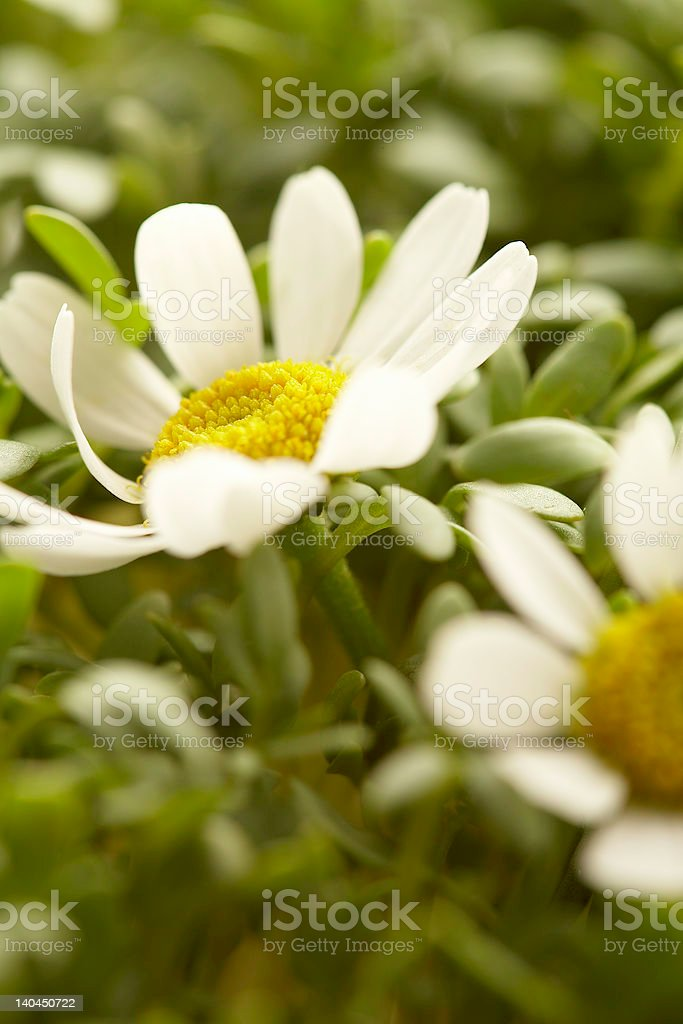 flower in sunrays royalty-free stock photo