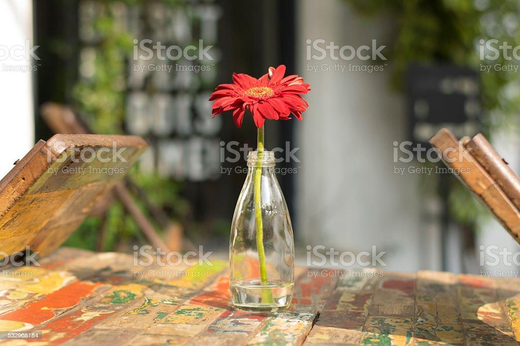 Flower in the bottle stock photo
