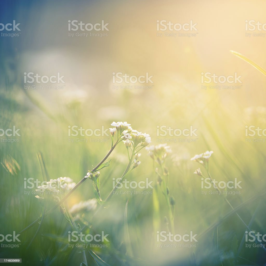 Flower in the morning light royalty-free stock photo