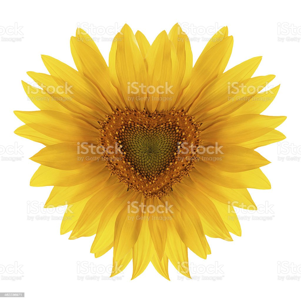 flower in the shape of heart stock photo