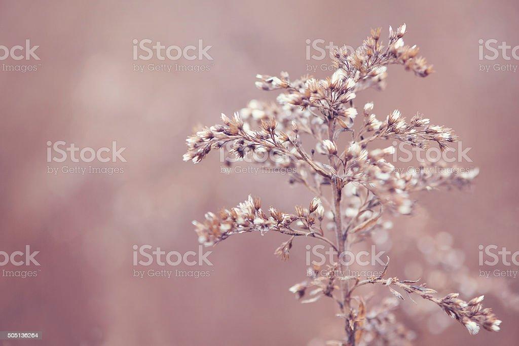 Flower in winter stock photo