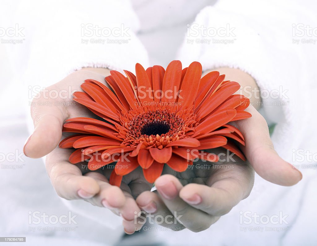 Flower in woman hand. Spa resord. royalty-free stock photo