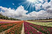 Flower kibbutz near Gaza Strip