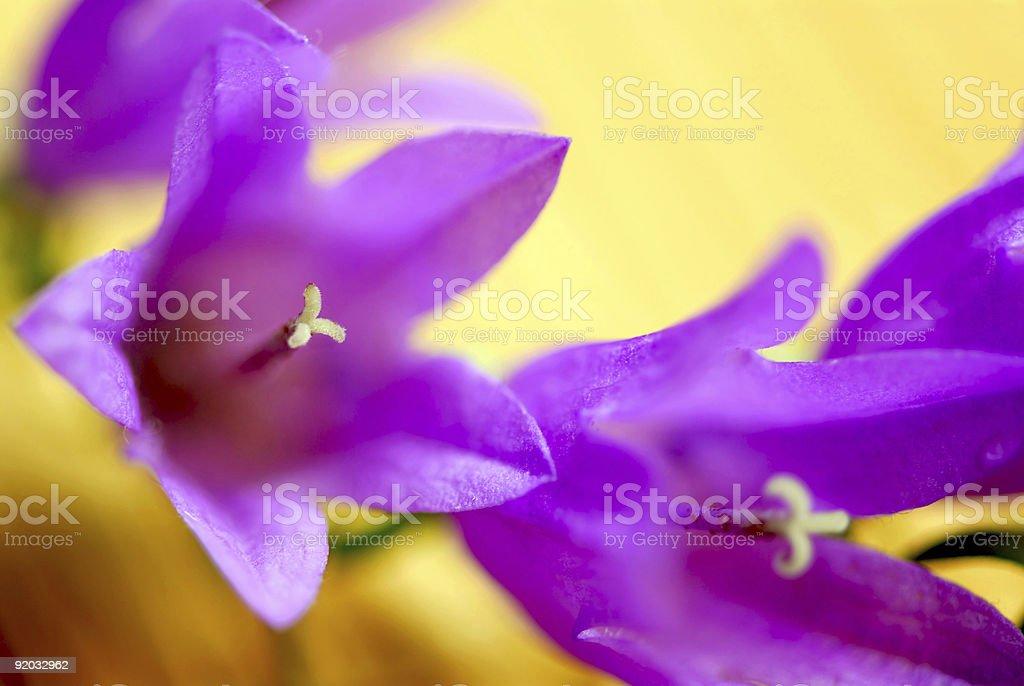Flower macro extreme royalty-free stock photo