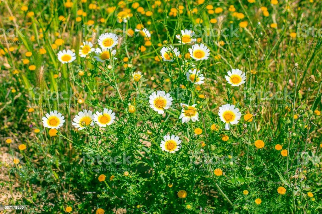 Flower macro photography stock photo