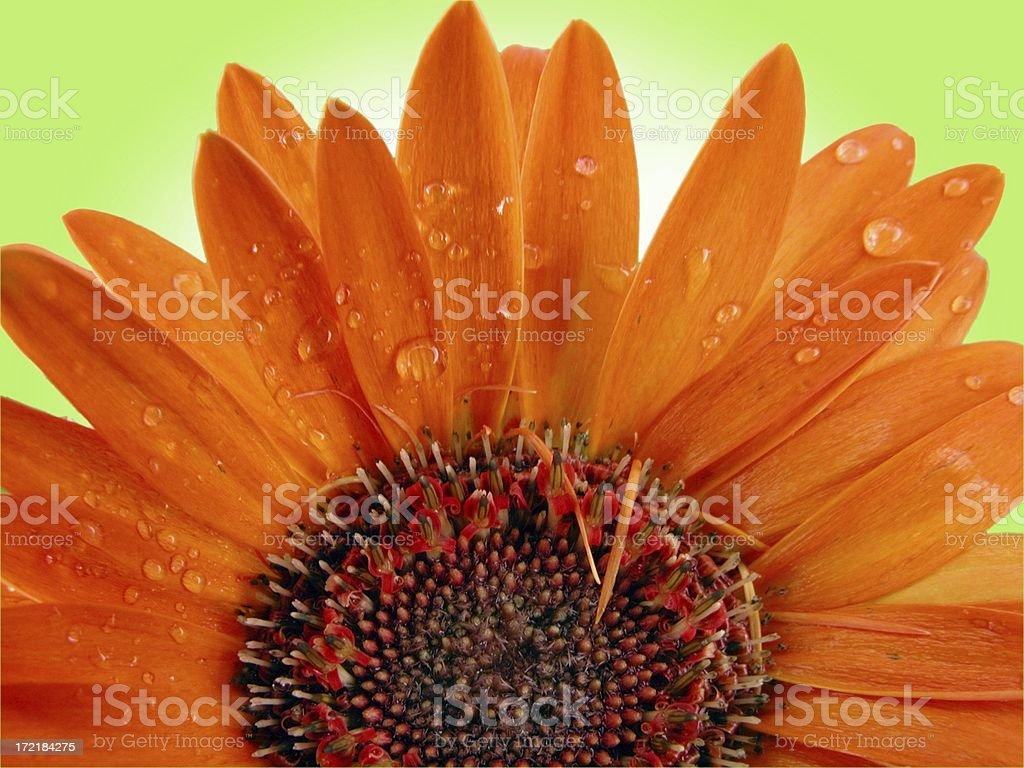 flower macro royalty-free stock photo