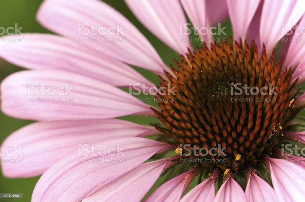Flower macro! royalty-free stock photo