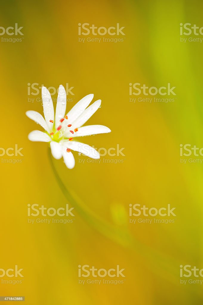 Flower. Macro shooting royalty-free stock photo