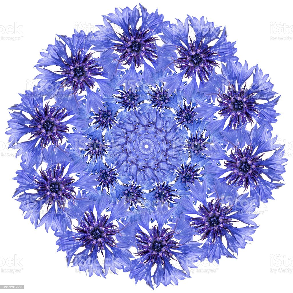 Flower mandala. Cornflower blue circular design. stock photo