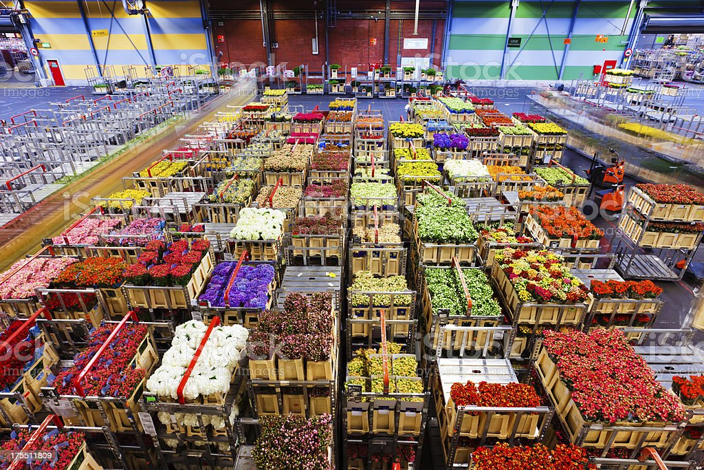 flower market of Aalsmeer royalty-free stock photo