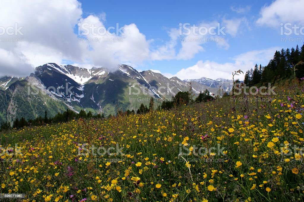 Flower meadow in the mountains stock photo