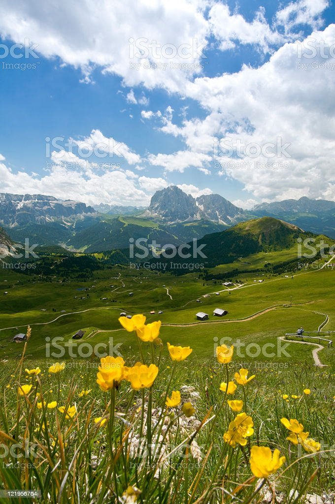 Flower meadow on the Cisles Alm, Dolomites, Italy stock photo