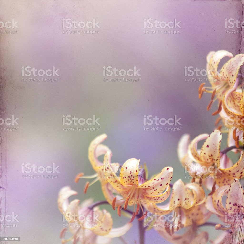 flower meadow paper background with colorful lily stock photo