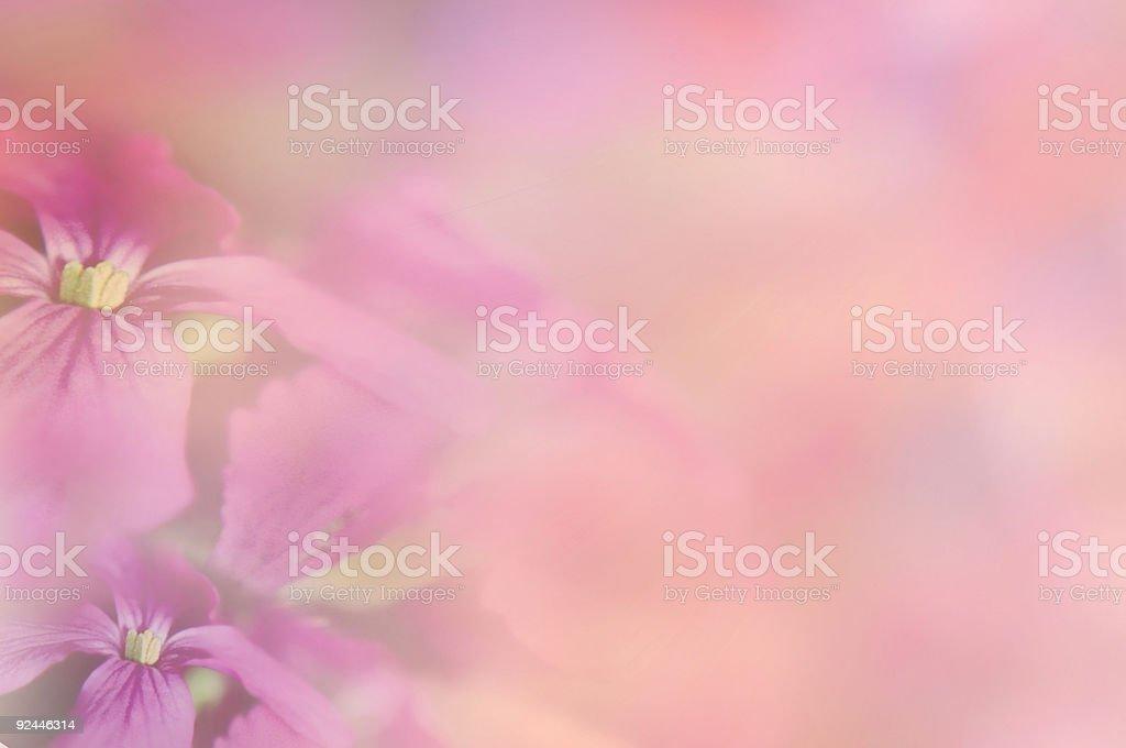 Flower Medley royalty-free stock photo