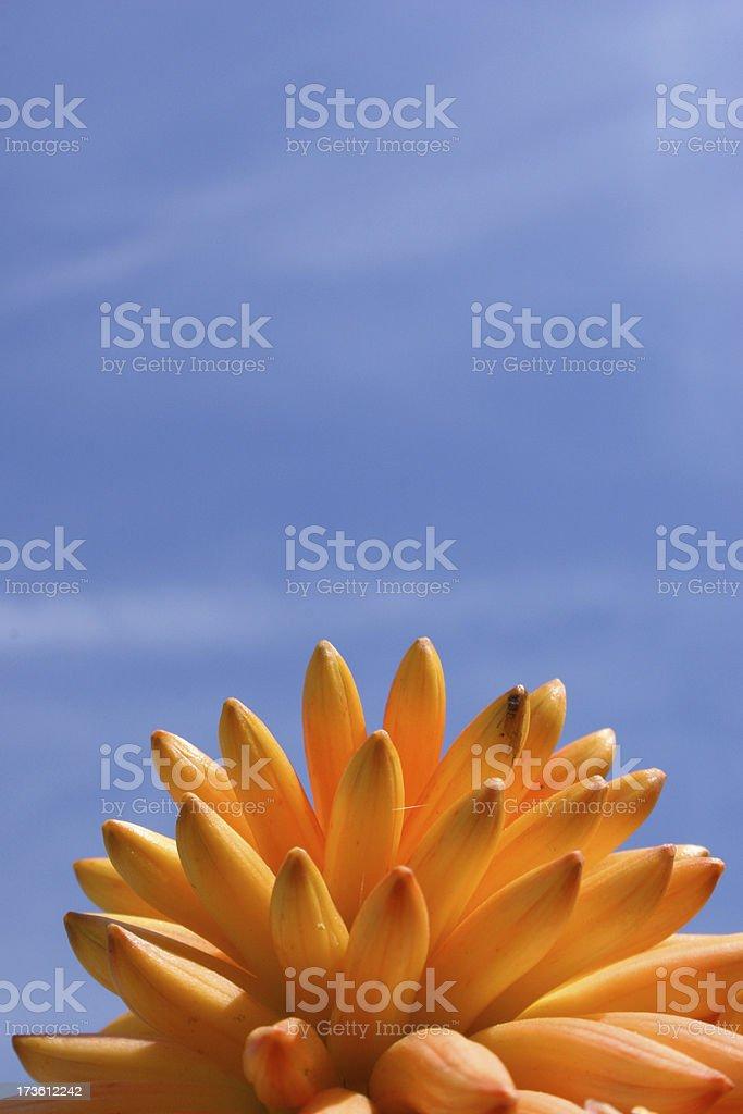 Flower mound royalty-free stock photo