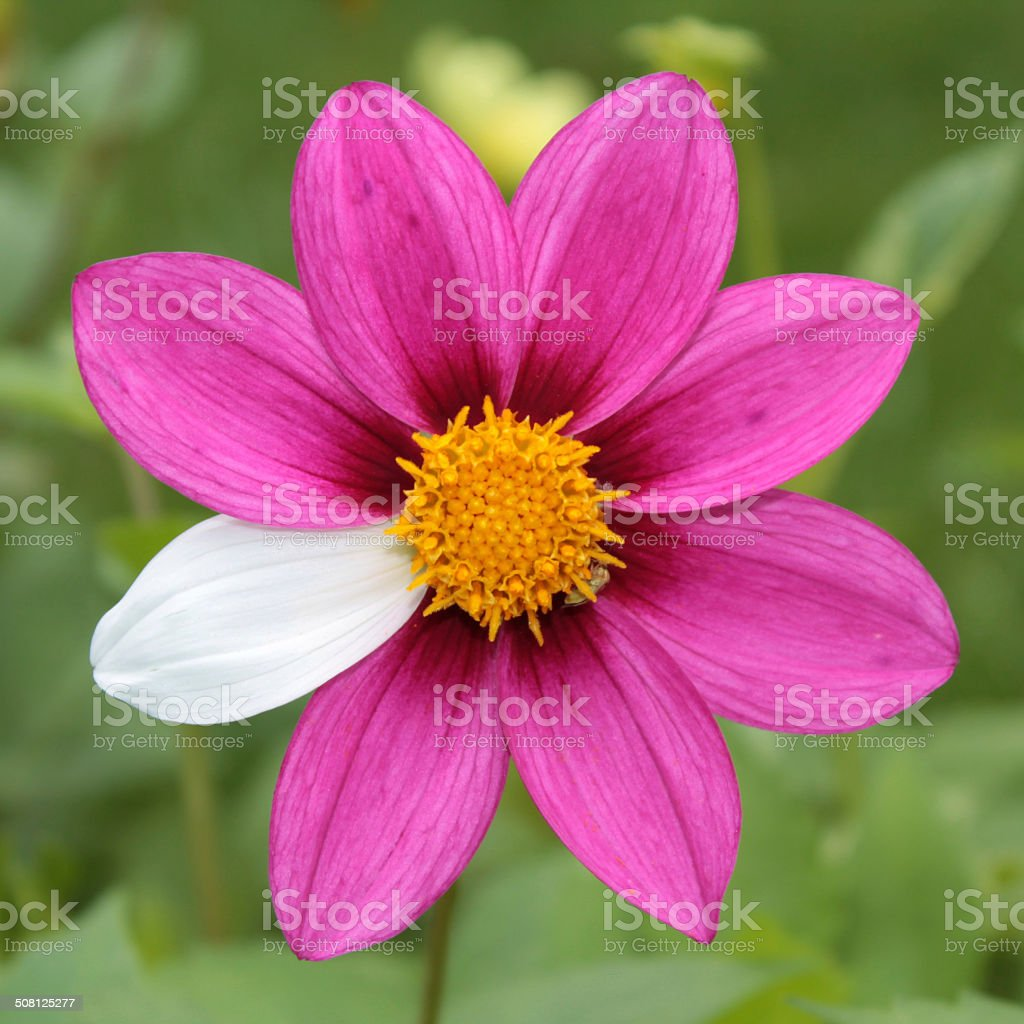 Flower mutant stock photo