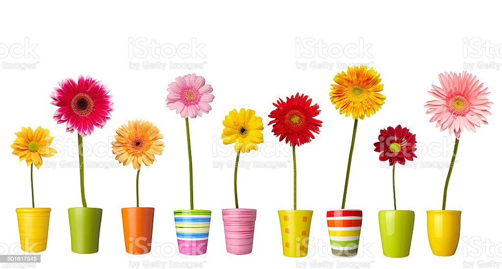 flower nature garden botany daisy bloom stock photo