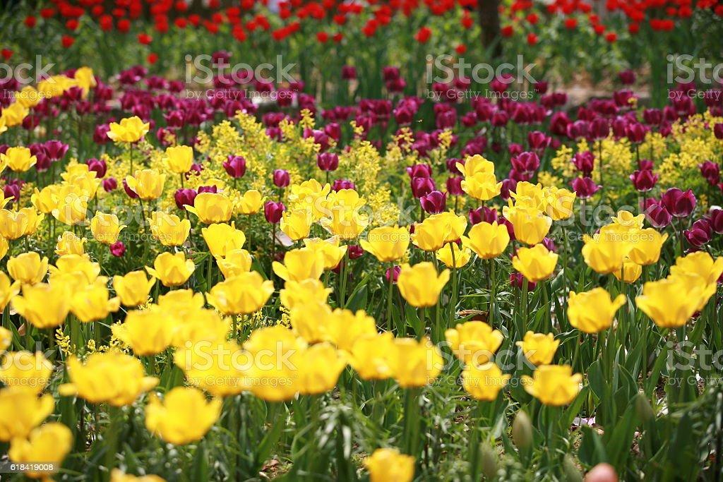 flower of garden stock photo