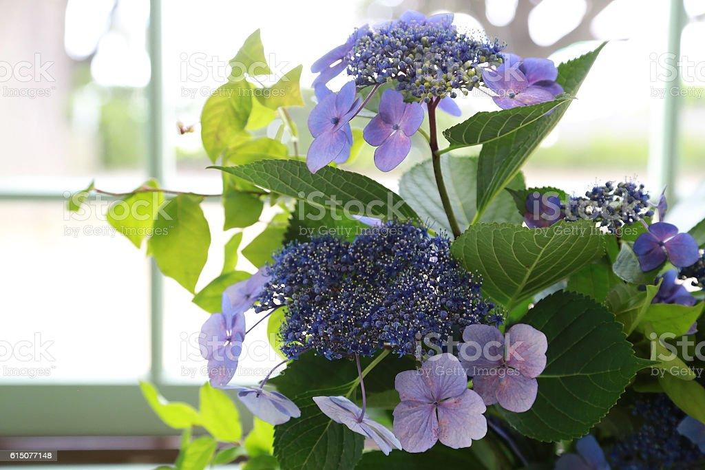 Flower of the window foto de stock libre de derechos