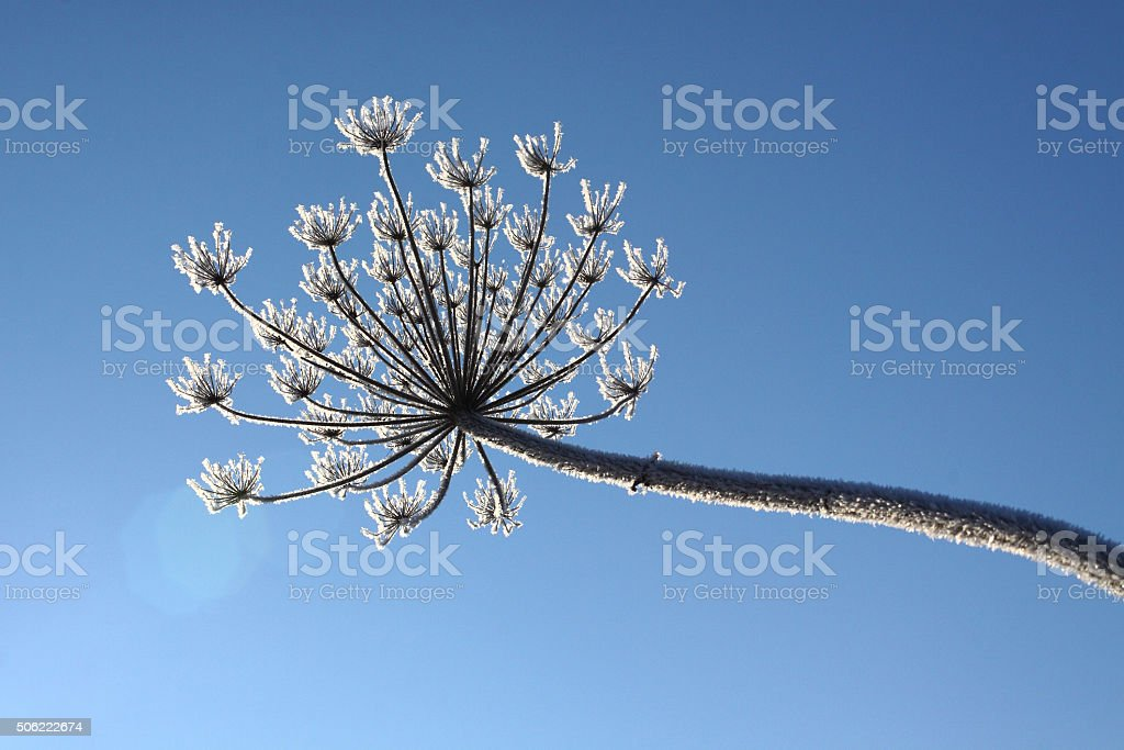 flower on a background of blue sky stock photo