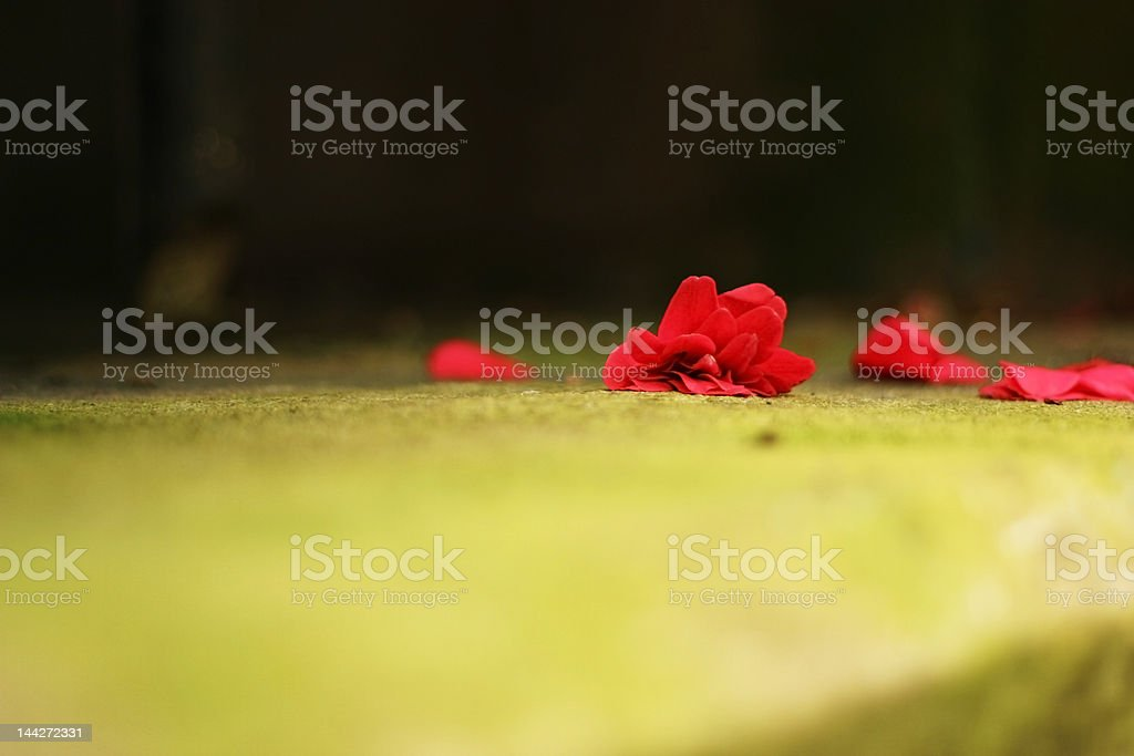 flower on a green surface royalty-free stock photo