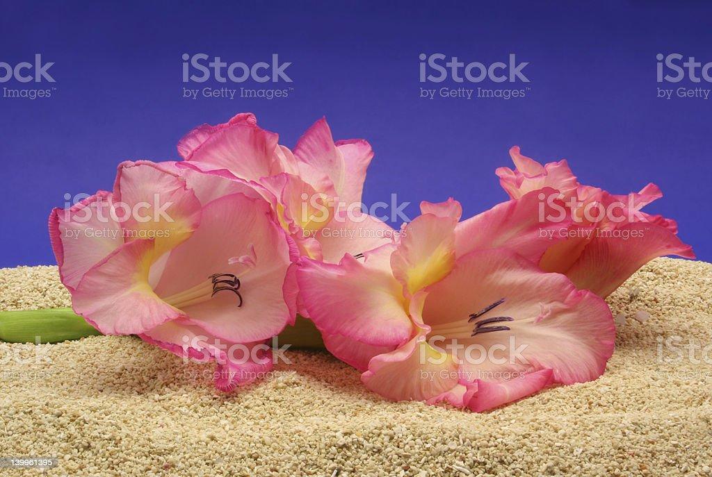Flower on Beach royalty-free stock photo