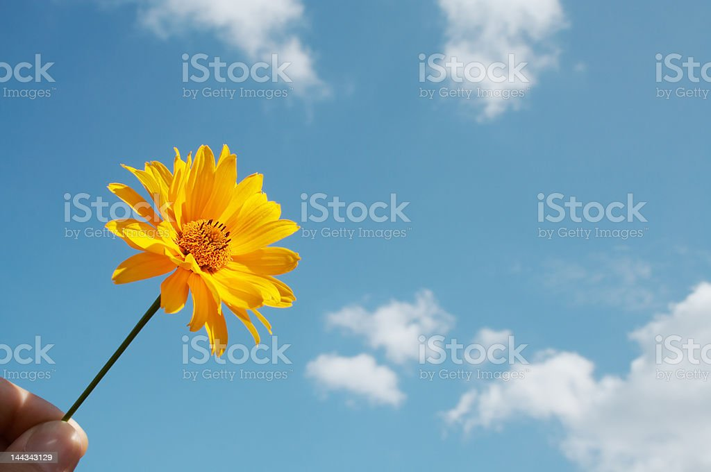 Flower on blue stock photo