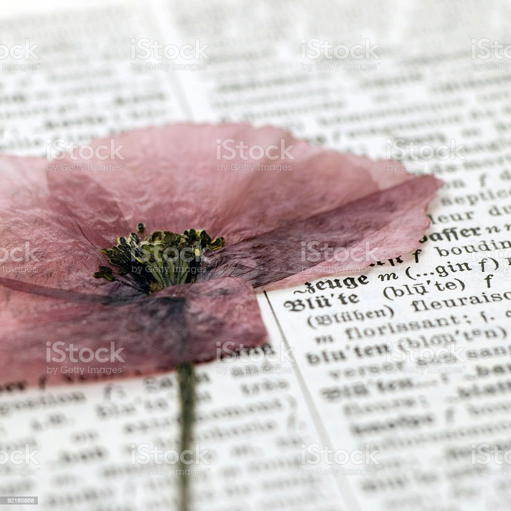 flower on dictionary royalty-free stock photo