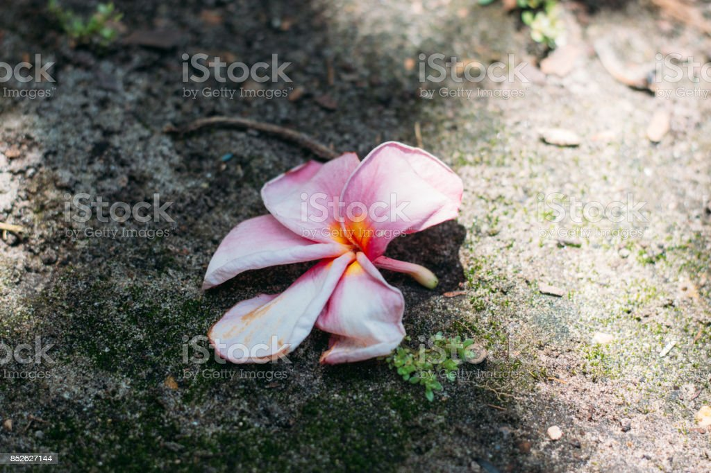 Flower on the Ground stock photo