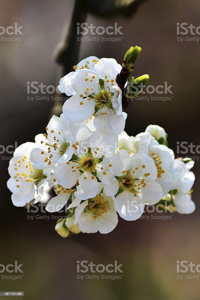 Flower on the tree stock photo