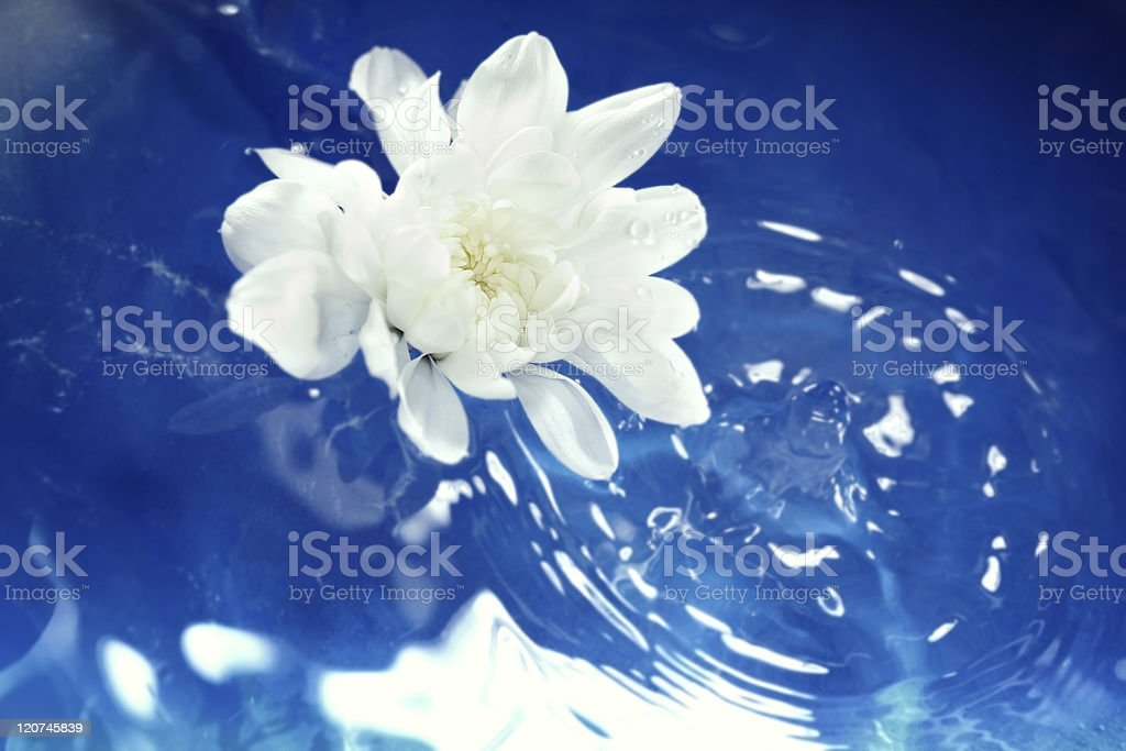 Flower on the water royalty-free stock photo