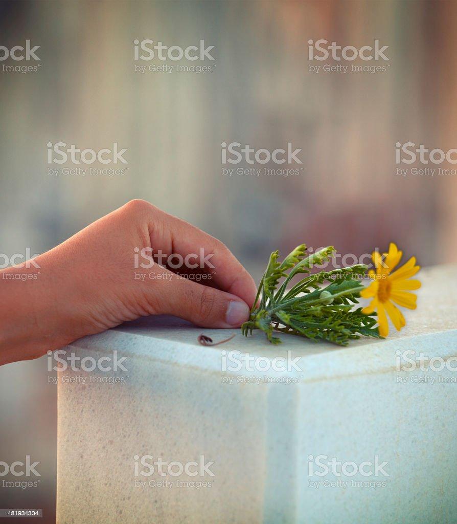 flower on tombstone stock photo