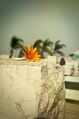 flower on tombstone