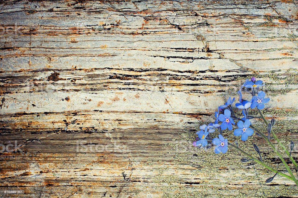 Flower on vintage stone background stock photo