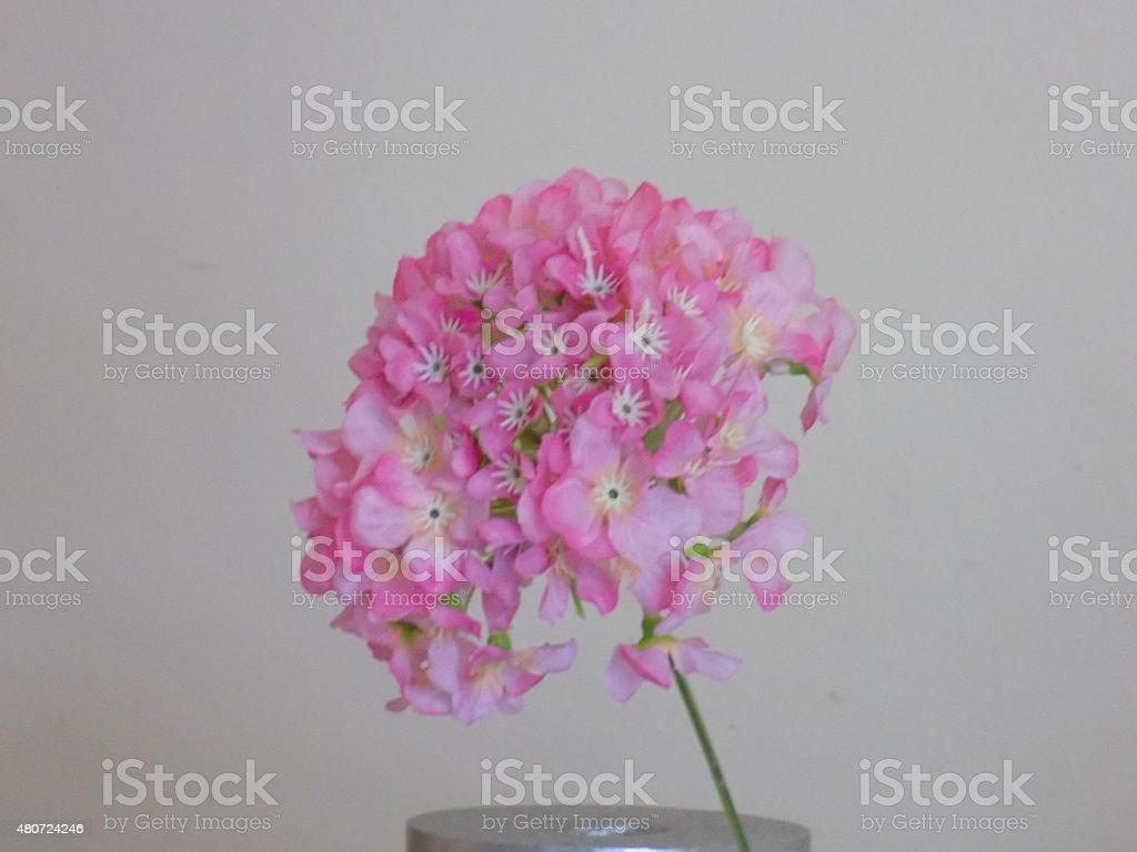 Flower on white background1 stock photo