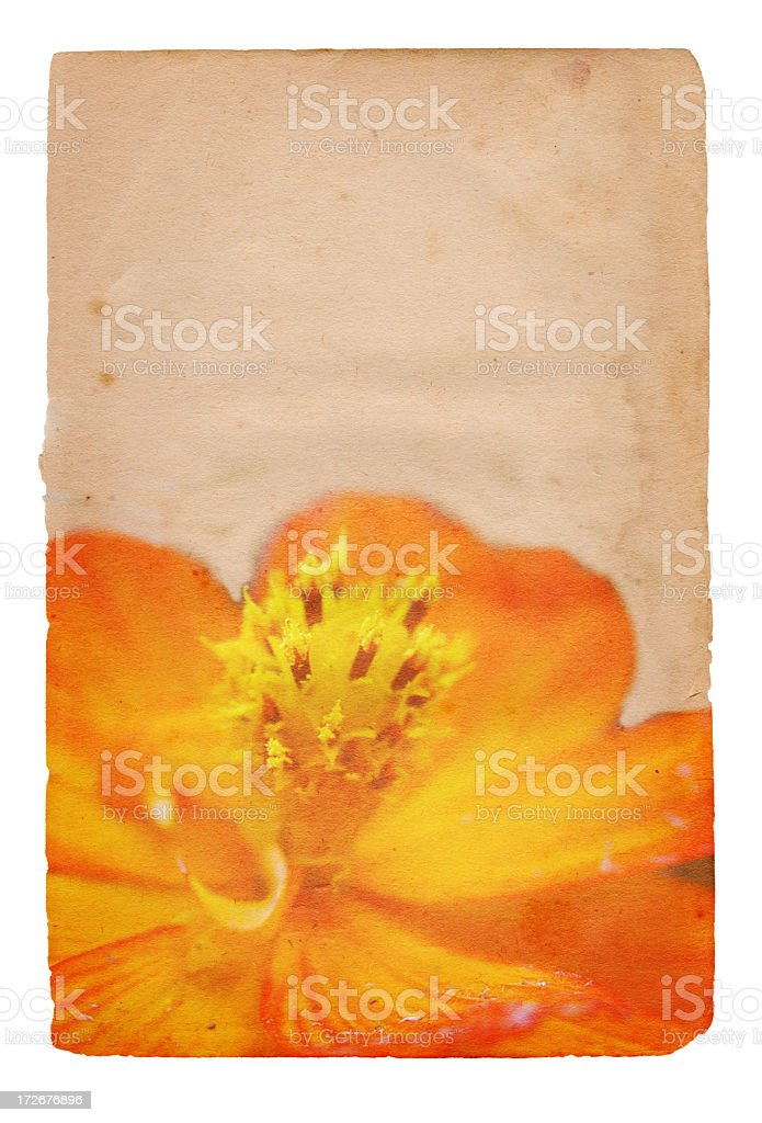 Flower Paper XXXL royalty-free stock photo