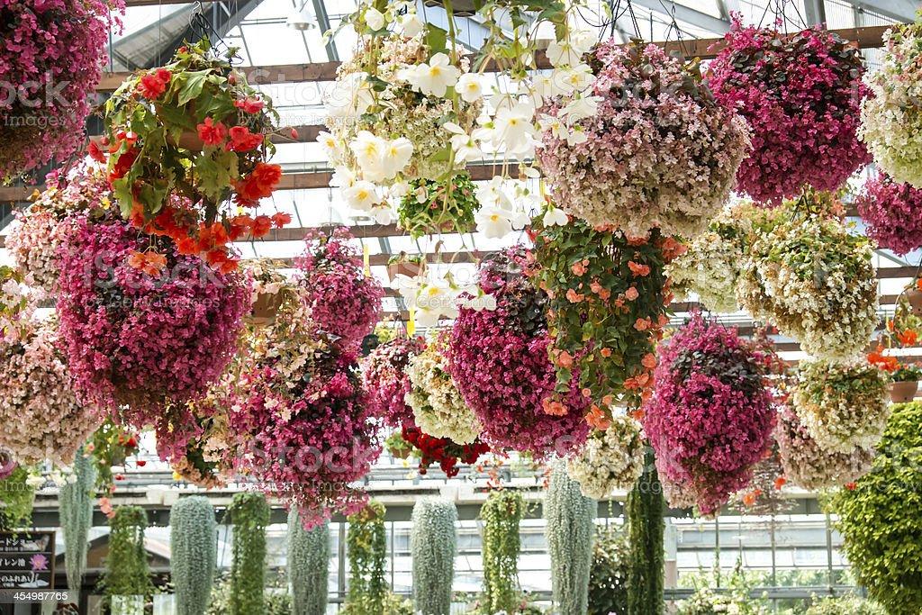 flower park stock photo