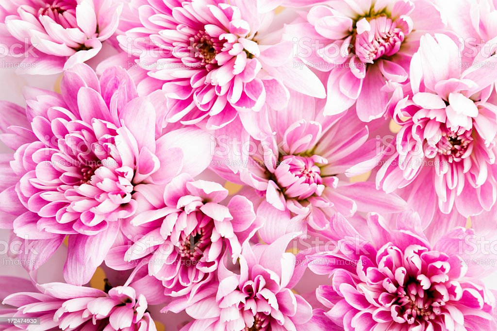 flower pattern royalty-free stock photo