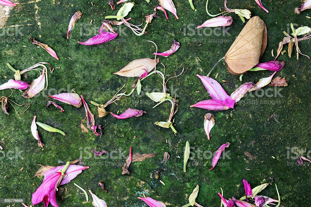 flower petals fall on the floor, nature background. stock photo