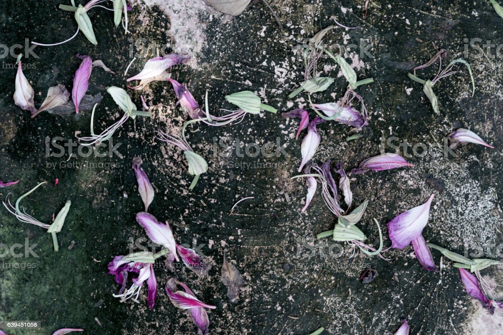 flower petals fall on the floor, vintage photo stock photo