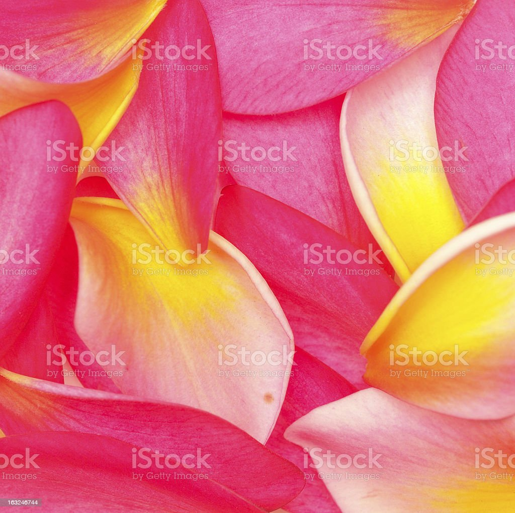 flower petals royalty-free stock photo