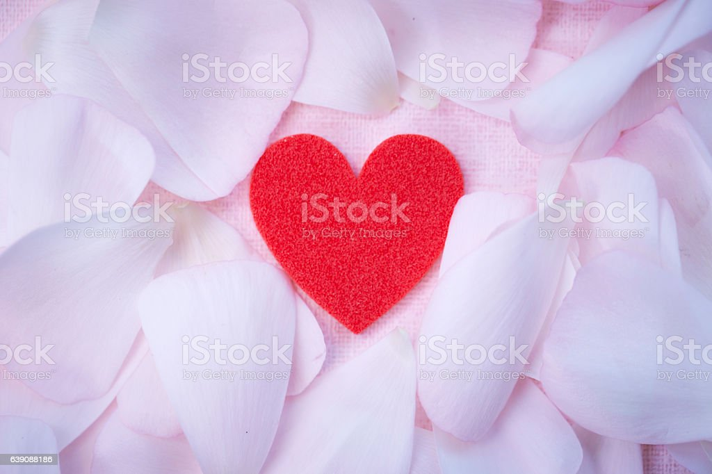 Flower petals with heart stock photo