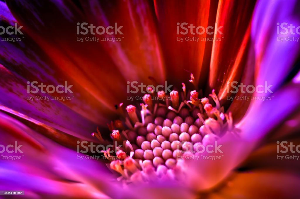Flower photo macro style stock photo
