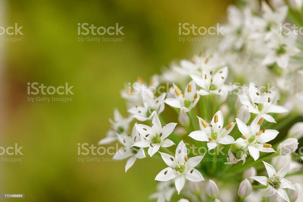 Flower royalty-free stock photo