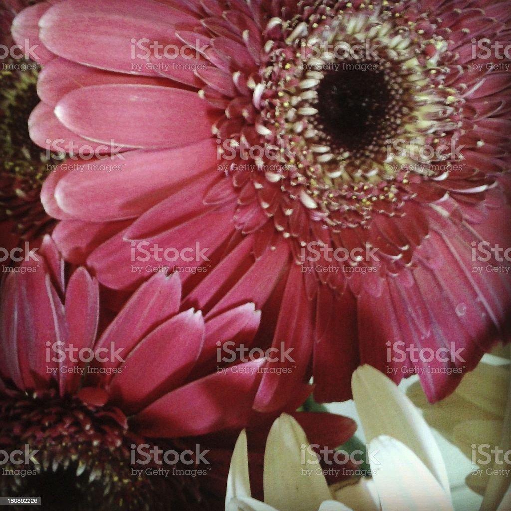 Flower. royalty-free stock photo