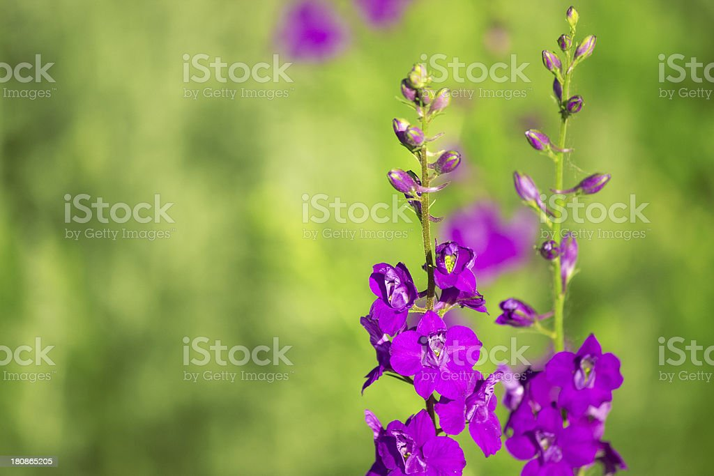 Flower. royalty-free stock photo